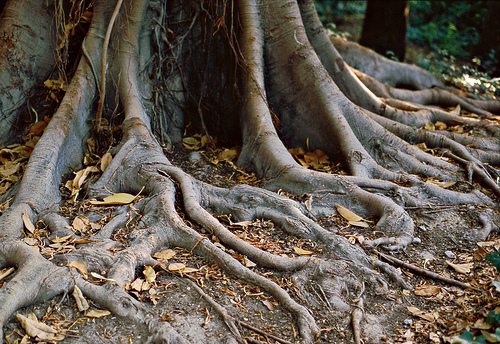 Roots, roots everywhere